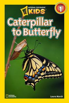Informational: National Geographic Readers: Caterpillar to Butterfly 2012 The book has large, detailed pictures of butterflies and their lifecycle. I would have our own classroom caterpillar and children would have journals where they could observe and document the stages they see through the butterflies transformation.