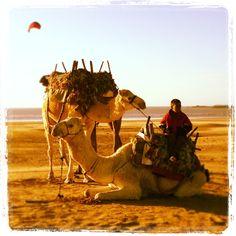 Essouira Camels by Jack Shaw, via 500px