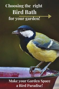 We all prefer birdbaths that add beauty and whimsy to our yards, but the birds themselves may be looking for something else, things that were designed for them in mind. Birds not only need water to drink and stay hydrated, but also to bathe, preen, and keep cool. A backyard birdbath can be especially important in dry areas where natural water sources are unpredictable or droughts are common. Diy Garden Projects, Outdoor Projects, Outdoor Ideas, Projects For Kids, Gardening Blogs, Gardening For Beginners, Organic Gardening, Backyard Farming, Backyard Landscaping