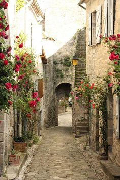 there's something so appealing about narrow alleyways with tumbling flowers . . . Dying of cute
