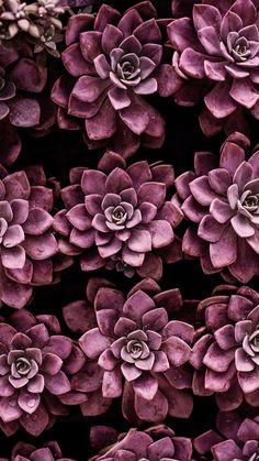Natur Wallpaper iPhone ::… Klicken Sie hier, um Nature Wallpaper iPhone Down . Succulents Wallpaper, Plant Wallpaper, Flower Wallpaper, Décor Violet, Shades Of Violet, Trendy Wallpaper, Wallpaper Backgrounds, Iphone Wallpaper, Iphone Backgrounds