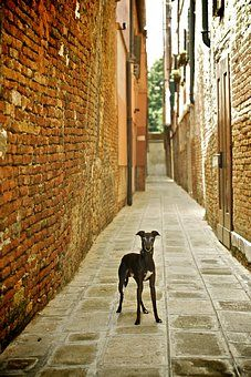 ...and what about me? #dog #venice