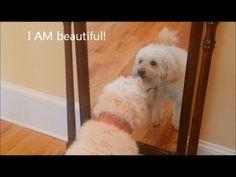 Fails 2013 FUNNY DOG Video