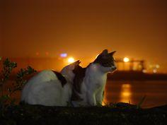 夜の猫20