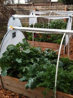 Raised bed gardens with pvc hoops, roll back covering and duct tape vents.  How perfect is that?
