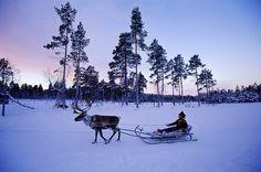 Abend- oder Morgenstimmung? Lapplands Polarnacht...