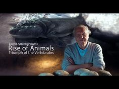 Documentary David Attenboroughs Rise Of Animals Part 1 National Geographic Videos, David Attenborough, Forrest Gump, Documentary Film, Ancient History, Biology, Documentaries, Movie Tv, Knowledge