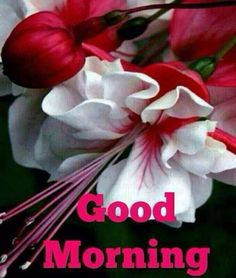 Say Good morning with flowers...