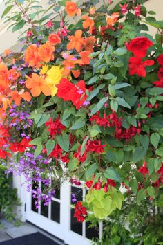 How To Grow Hanging Baskets From Seed – Grow Beautiful & Save Big! How To Grow Hanging Baskets From Seed – Grow Beautiful & Save Big! Planting Vegetables, Growing Vegetables, Fresh Vegetables, Container Plants, Container Gardening, Hydroponic Gardening, Indoor Gardening, Gardening Tips, Shade Garden
