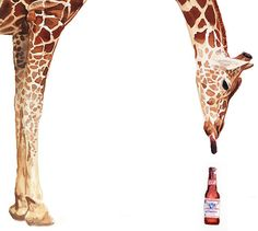 """'""""Licker with Beer"""" Giraffe Watercolor' by Paul Jackson Paul Jackson, Mural Art, Murals, Beer Art, Brown Bottles, Stephen Covey, Animals Of The World, Animal Paintings, Giraffes"""