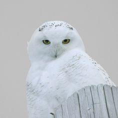 extraordinaire !  White as snow