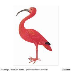 Flamingo - Fine Art Postcard