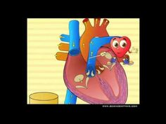 Cute video (too bad it is just a preview) but does tell about the atria and ventricles in a cute way.