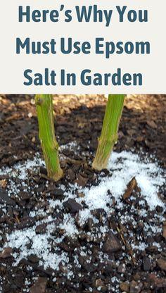 Gardening For Beginners, Gardening Tips, Container Gardening, Balcony Gardening, Greenhouse Gardening, Organic Gardening, Outdoor Plants, Outdoor Gardens, Bamboo Plants
