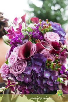 purple flower beauty