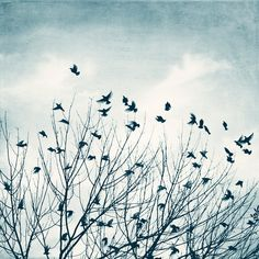 """Birds Flying Photography - light blue grey white black sky print nature photo pale wall art gray fly picture - 10x10, 8x8 Photograph, """"Flee"""" on Etsy, $32.32 AUD"""