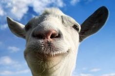 39 Best Goat Simulator images in 2015 | Goat simulator, Goats, Games