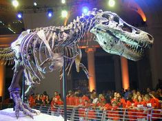 Sue. The biggest t-rex ever unearthed. Proud to say she can call the Field Museum in Chicago home.