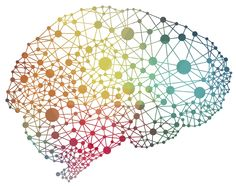 The human brain - How You Can Transform Business Culture Using Neuroscience