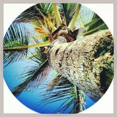 Bomb bomb palm palm in west palm palm!