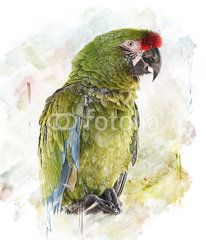 Watercolor Image Of  Parrot