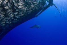 Coming to Your Dinner Plate: Dolphin-and-Whale-Safe Seafood | TakePart