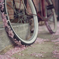 Cherry blossom petals on bicycle wheel Autumn Photography, Art Photography, Whimsical Photography, Beltane, Yukata, Pretty Pictures, Pretty Pics, Oeuvre D'art, Make Me Smile