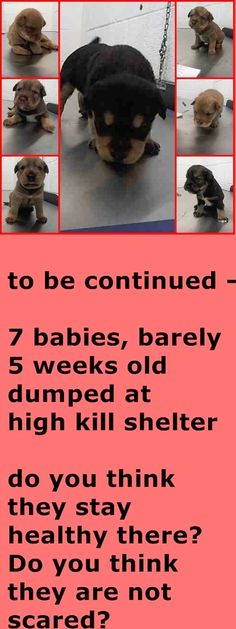 RESCUED --- 7 BABIES, barely 5 weels old, dumped at high kill shelter Miami Dade.  How heartless. If they are not rescued immediately they will get sick and killed.    https://www.facebook.com/urgentdogsofmiami/photos_stream