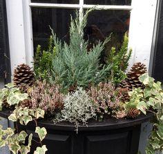 Winter window boxes: cyclamen, conifers, heather, ivy ...