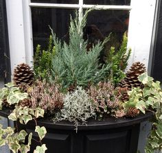 images about winter container gardens on Pinterest