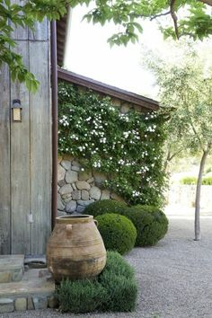 Murs de cloture. Buis. Plantes vertes. Un grand pot.