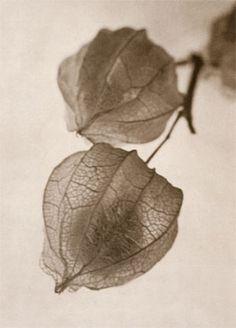 José Alemany - Chinese Lanterns, 1936