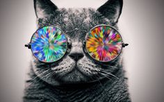 Cat wearing cool eyeglasses. HD wallpaper[19201080] - See more on Classy Bro