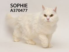 Adopted! Sophie has found her forever home. 9/9/15.