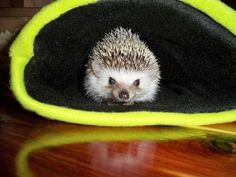 Craft It: A Snuggle Sack (for your pet pygmy hedgehogs, guinea pigs or rats!) - Full Tutorial