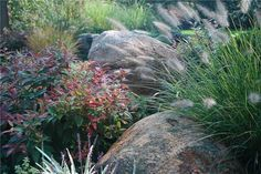 The muted tones and simple beauty of boulders and foliage interest is emphasized in a country setting. (Great article on farmhouse landscaping).