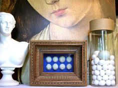 Coral Specimen Shadowbox by specimenboxshop on Etsy, $110.00
