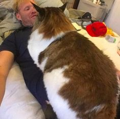 This Is The Largest Cat In New York City - Samson is a Maine Coon cat who is 4 feet long and weighs 28 pounds.