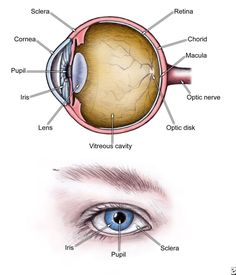 Human eye anatomy parts of the eye explained pinterest diagram ankylosing spondylitis pictures ankylosing spondylitis ophthalmologic perspective causes symptoms ccuart Image collections