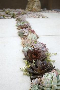 Look at this simple and elegant #WaterWise succulent garden