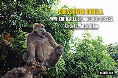 Great video by the World Wildlife Fund that puts man's relationship with nature into a fresh prospective. #wildlife #gorilla