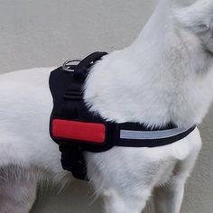 Bandes lumineuses à Velcro - Accessoire de sécurité pour chien - Trixie    wanimo Harnais Chien 1c4b8957ad66