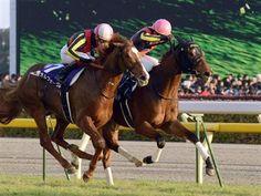【JRA賞】年度代表馬にジェンティルドンナ!父ディープと2代受賞