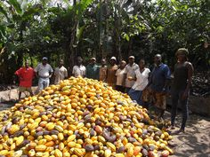 Cocoa producers in Ghana