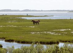 Chincoteague Island.  This is a special place on the Delmarva peninsula.