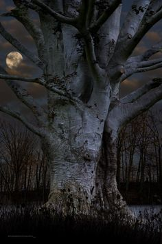 tree by moonlight. Tree natuurbeleving www. Beautiful Moon, Beautiful World, Beautiful Places, Trees Beautiful, All Nature, Amazing Nature, Tree Of Life, Belle Photo, Faeries