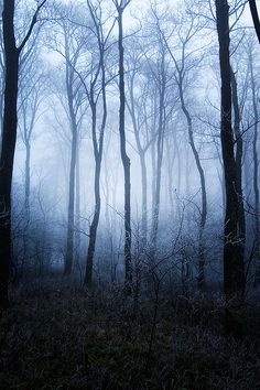 Frosted Flake Wood III By Tommy Martin On Flickr.