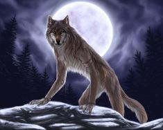 http://images5.fanpop.com/image/photos/31000000/Werewolf-fantasy-31034491-1280-1024.jpg
