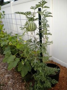 Magic Garden, Veg Garden, Vegetable Garden Design, Fruit Garden, Edible Garden, Garden Beds, Diy Trellis, Garden Trellis, Bucket Gardening