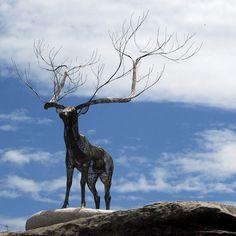 Sculptures by the Sea...Deer, amazing